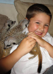 Brandon and the Meerpups