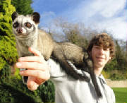Tom with the Palm Civets