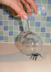 Catching fake spider
